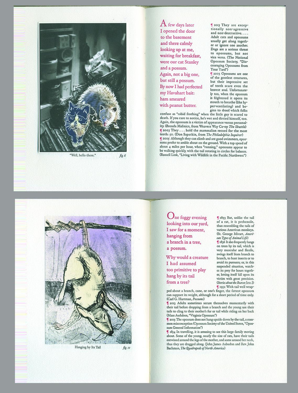"Susan Viguers, ""The Opossum: A Specimen Book"""